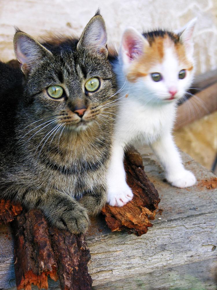 Kočičí rodinka